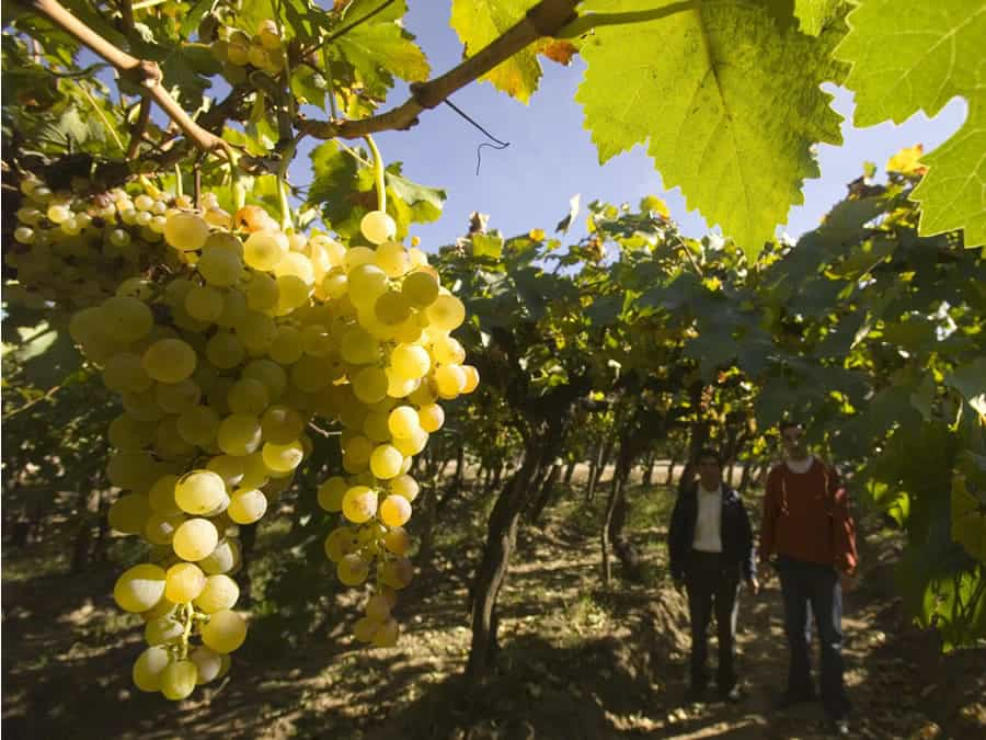 la ruta del vino valles
